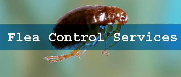 Eco-Friendly Flea Control Services