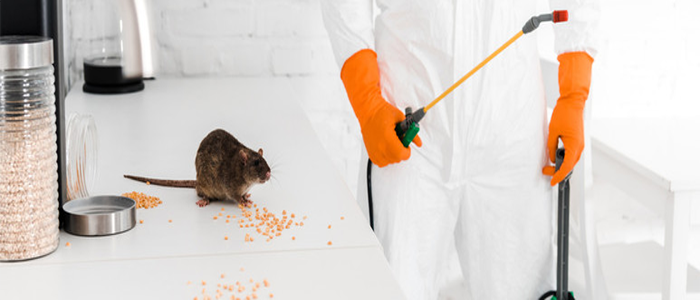 Effective Rodent Control Service