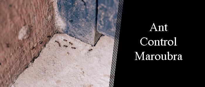 Ant Control Maroubra