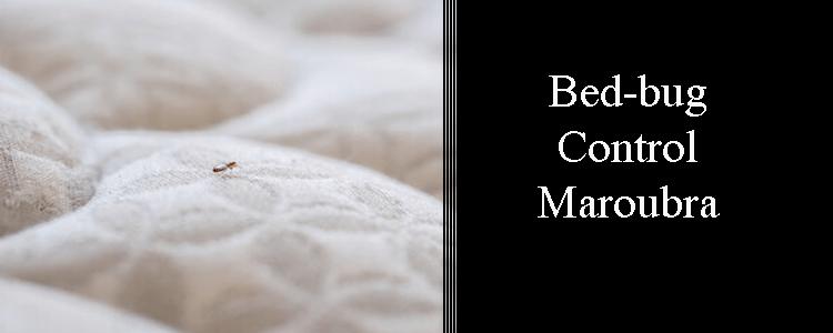 Bed Bug Control Maroubra